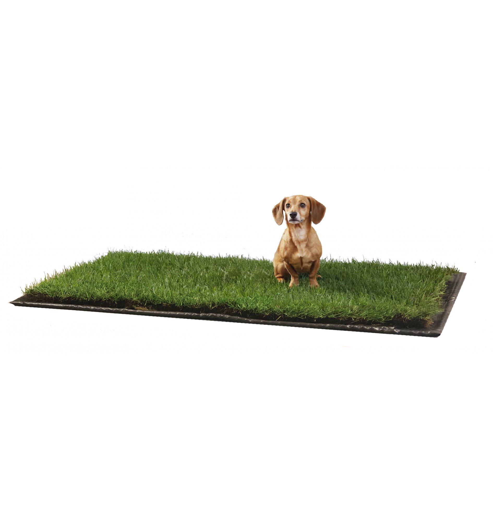 XL DoggieLawn FLEX-TRAY