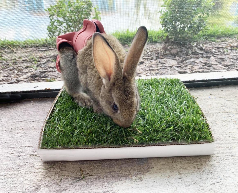 Bunny Lawn
