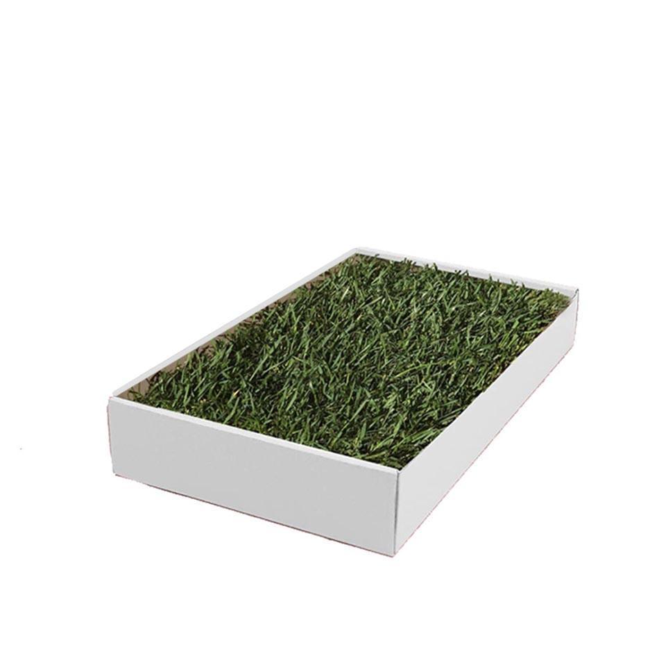 Hamster Lawn