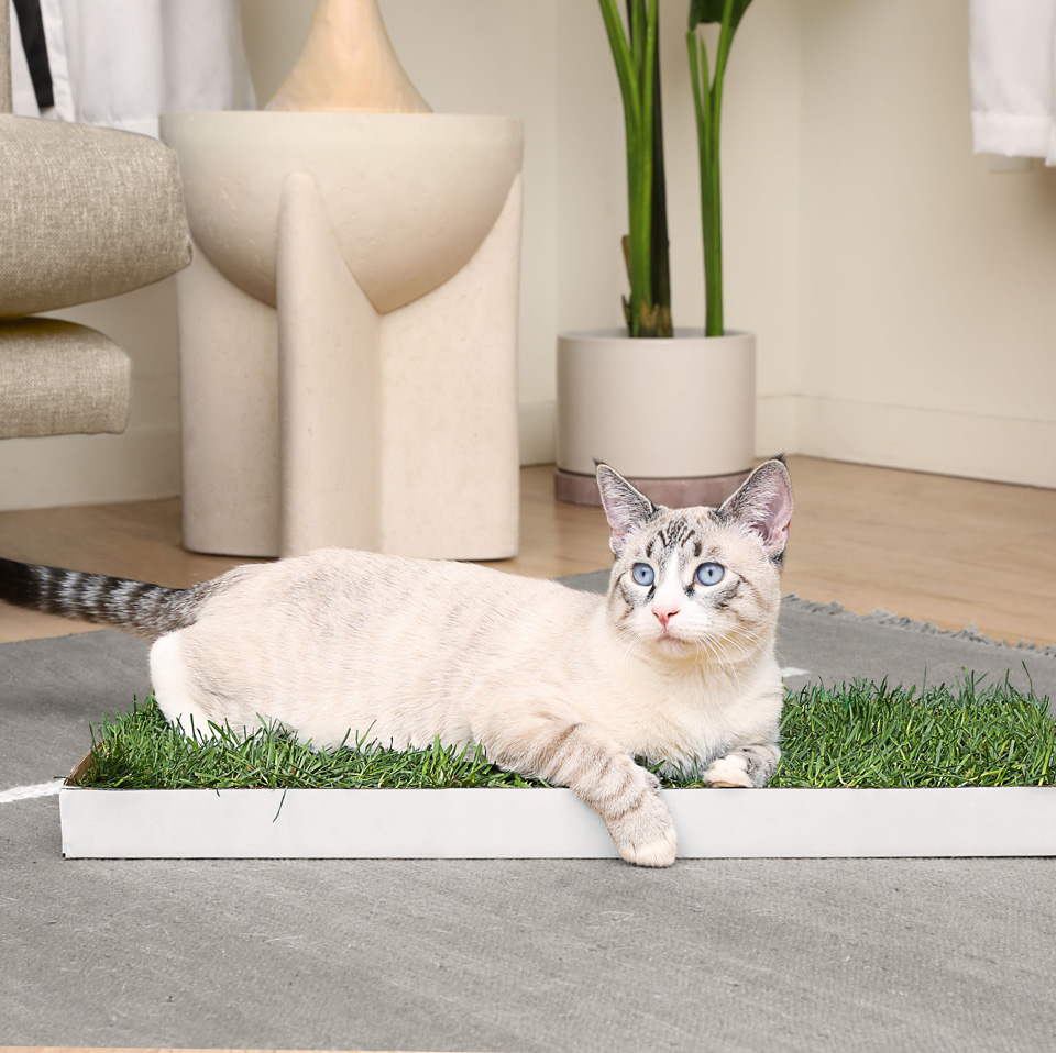 Kitty Lawn