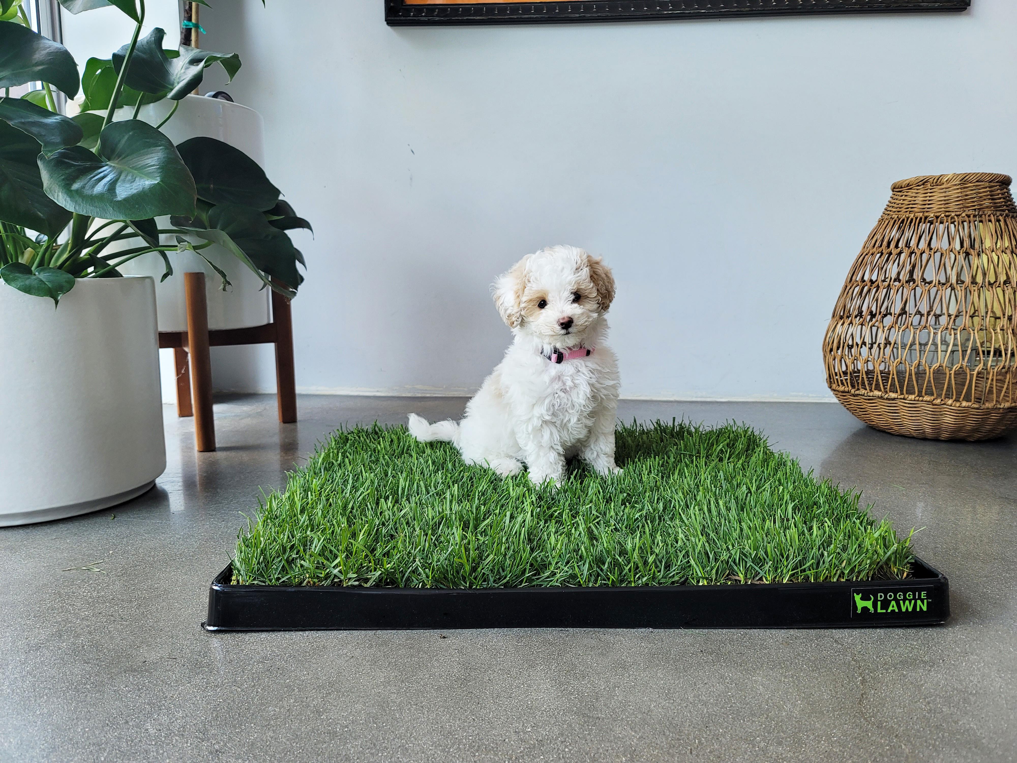 DoggieLawn New Puppy Bundle